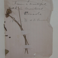 Plucked by rue? Margarites. From a beautiful park in Montreal Canada. 1893- D. de la Guerra.