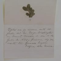 Ojitas que yo misma carte del jardin del Gen. George Washington en Mount Vernon el dia 10 de Julio de 1893. [primera?] vez que visite tan [farnoso?] lugar. Delfina de la Guerra